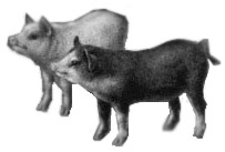 Pigs for Pirates. (Prepared for Baccalieu: Crossroads for Cultures by Baccalieu Consulting, �2005.)
